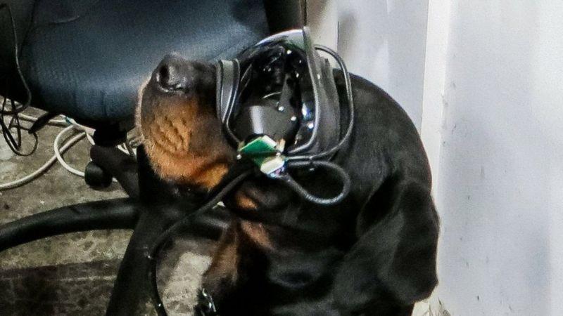 Армия США испытывает очки с дополненной реальностью для собак