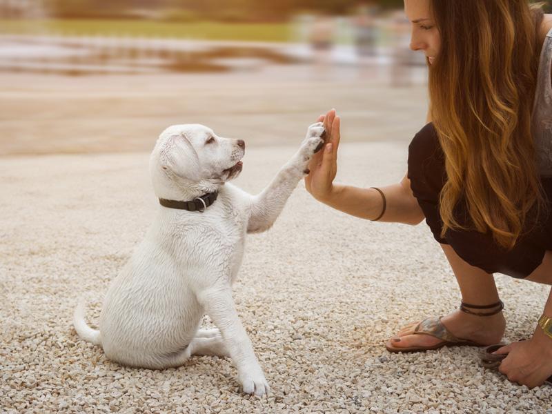 Топ-5 советов, которые помогут вам определиться с выбором собаки