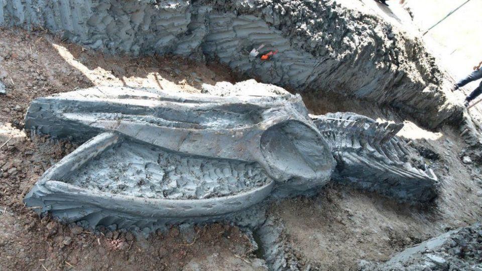 В Тайланде обнаружен редкий скелет кита