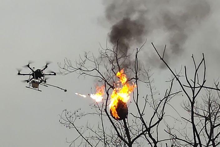 Дрон-огнемет сжигает осиные гнезда в Китае