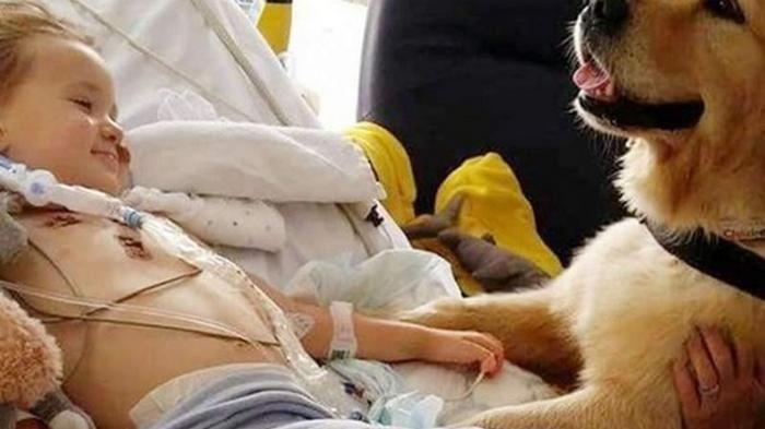 Пёс положил лапу на руку умирающего ребенка и буквально исцелил его