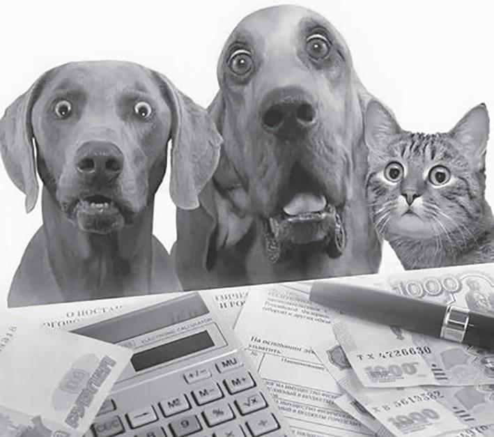В России ввели ограничение на количество домашних животных