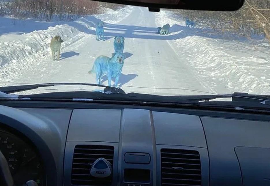 В России обнаружены ярко-синие собаки