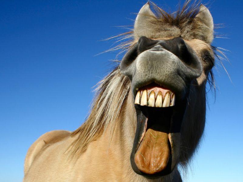 Россиянка заявила в полицию, что ее «изнасиловал конь»