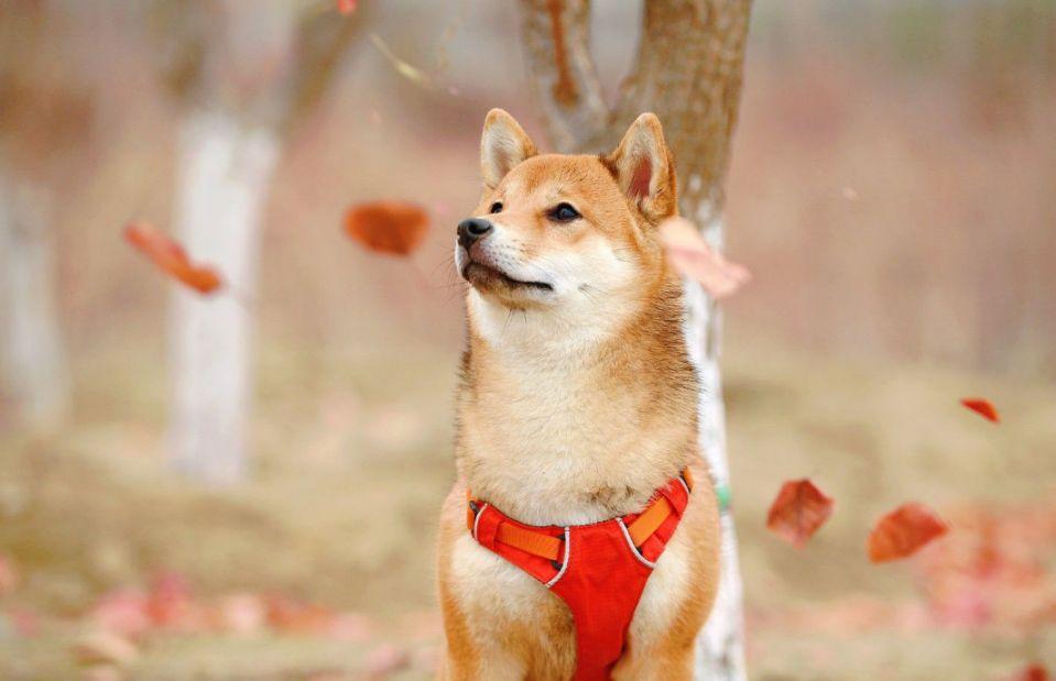 Dogecoin теперь можно купить в 1800 банкоматах США