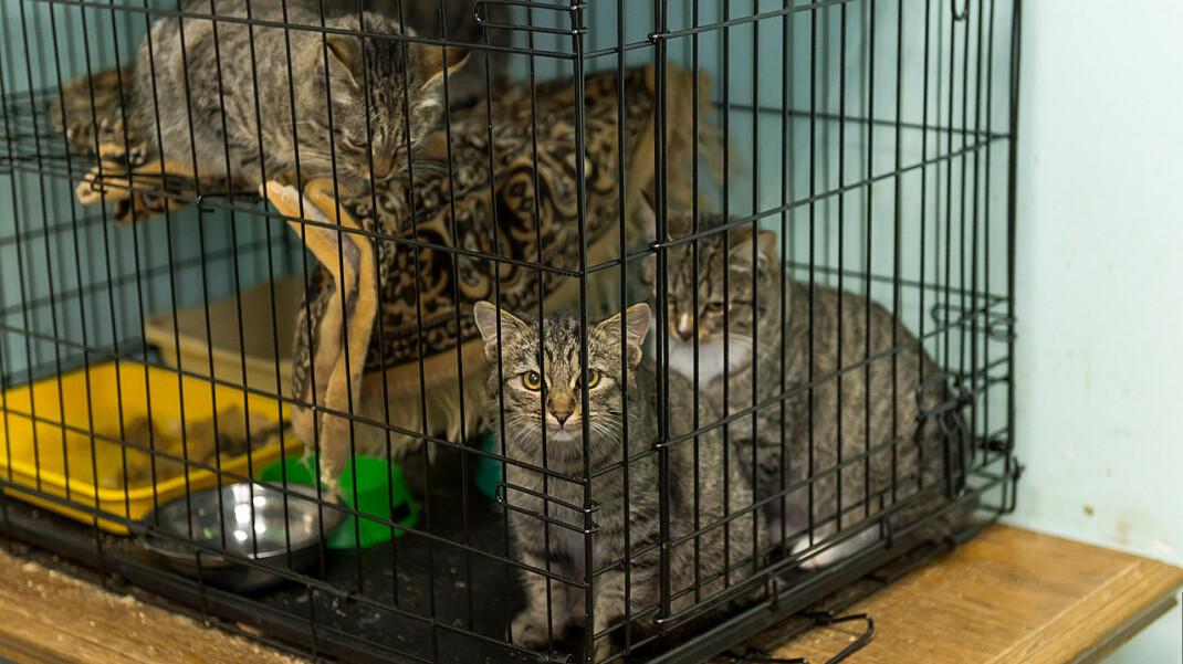 Депутаты предложили разрешить убивать бездомных животных в приютах