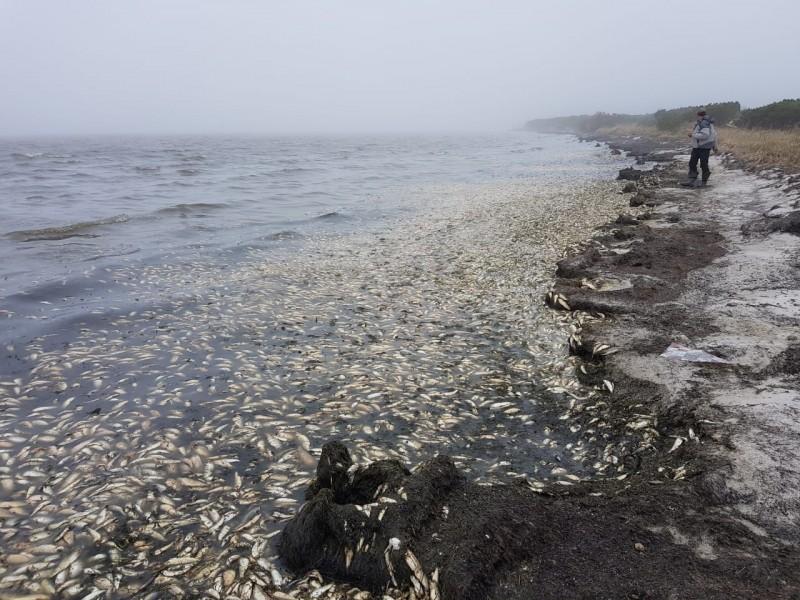 Берега Сахалина засыпало сельдкой