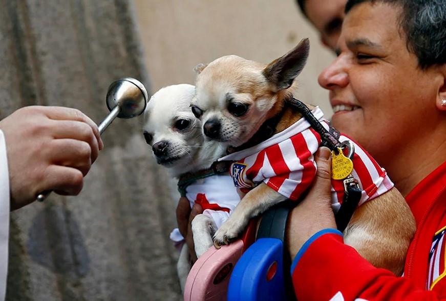 Испания предоставит домашним животным те же права, что и людям