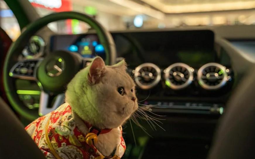 любимица может стать моделью для рекламы автомобильных брендов