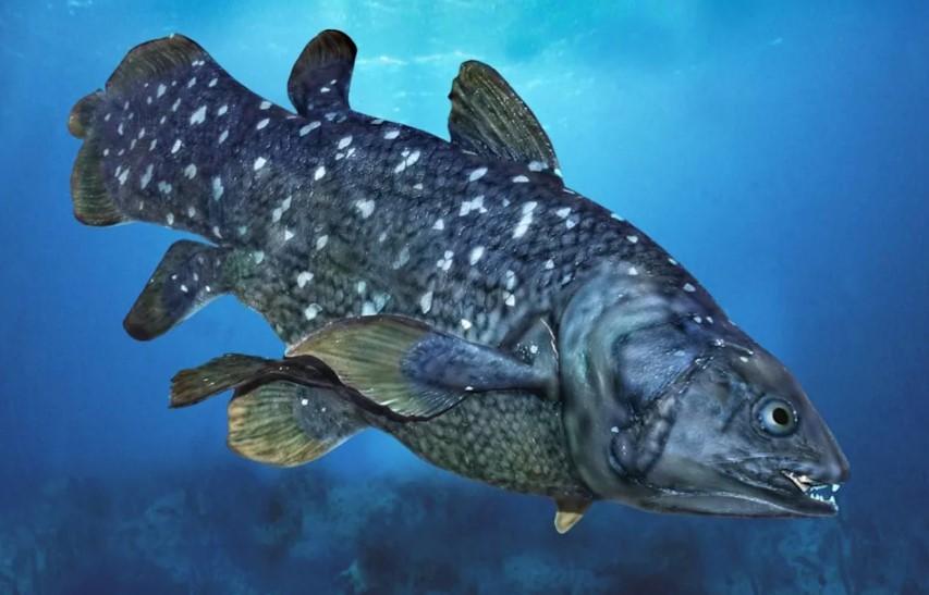 Вид рыб, который когда-то считался вымершим, на самом деле процветает