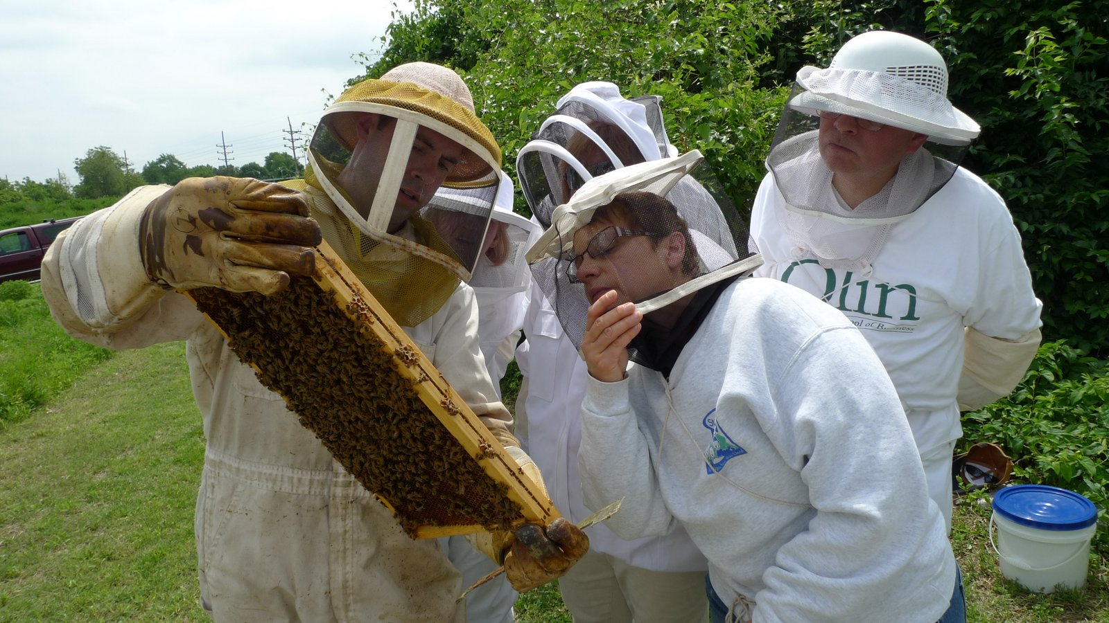 В Нидерландах пчел обучили распознавать коронавирус