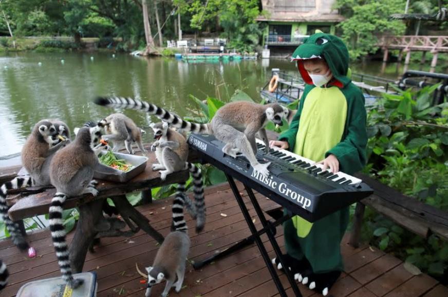 Тайская девочка сыграла для животных в заброшенном зоопарке