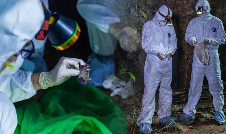 В Краснодарском крае нашли новый вид коронавируса