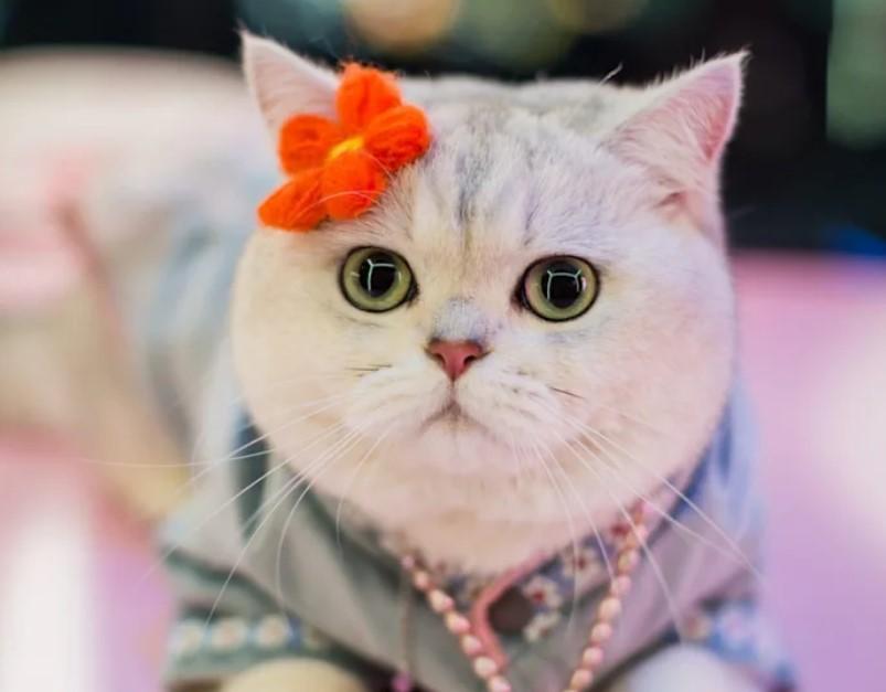 В Китае кошка официально стала автомобильной моделью