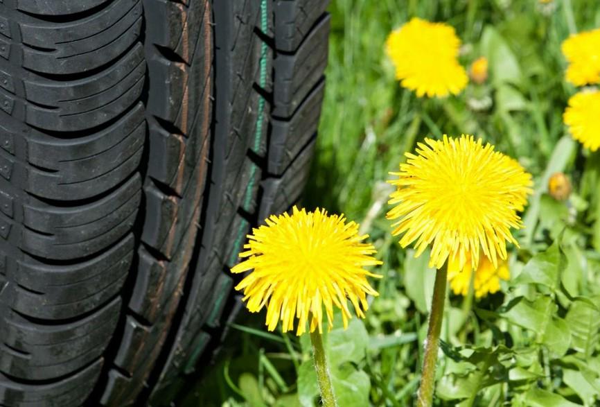 Резина, сделанная из одуванчиков, делает шины более экологичными