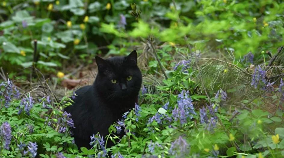 Похоронил кота во дворе жилых домов - штраф 10 000 рублей