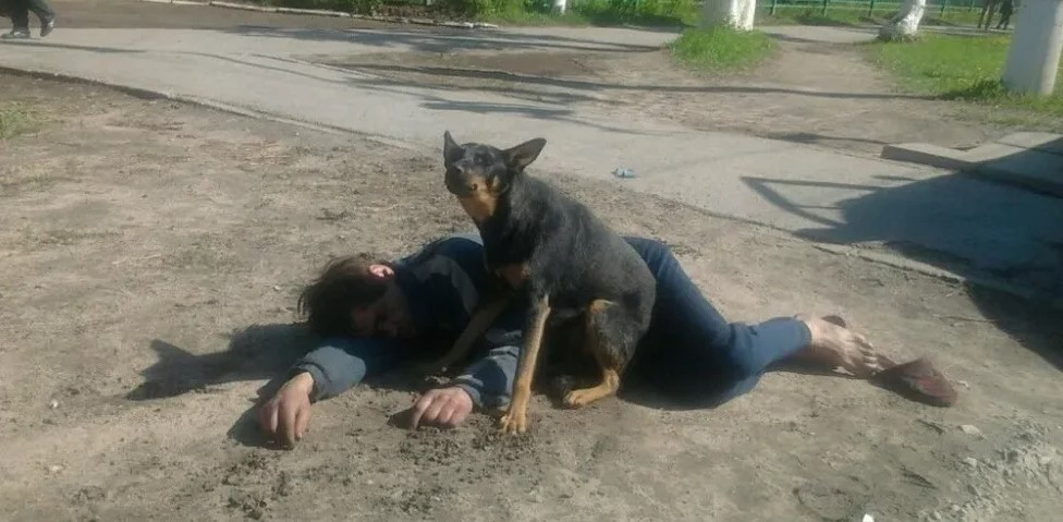 В России хотят запретить пьяным выгуливать собак