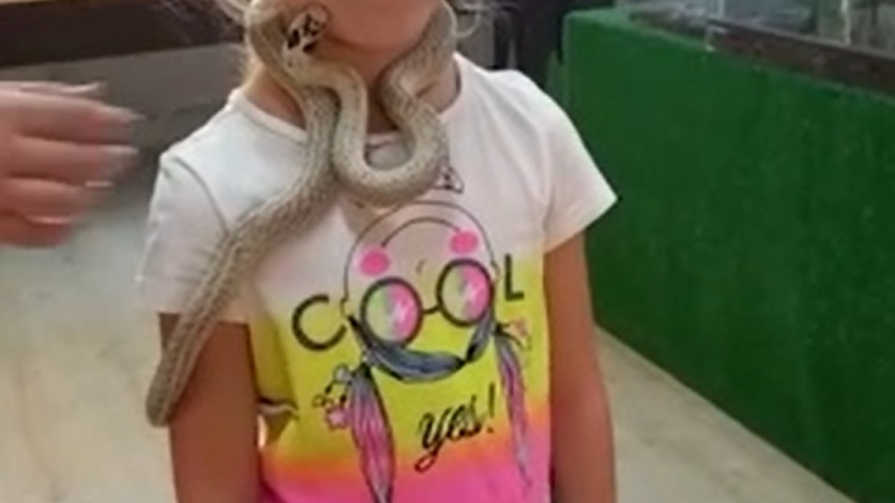 Змея укусила 5-летнюю девочку в контактном зоопарке
