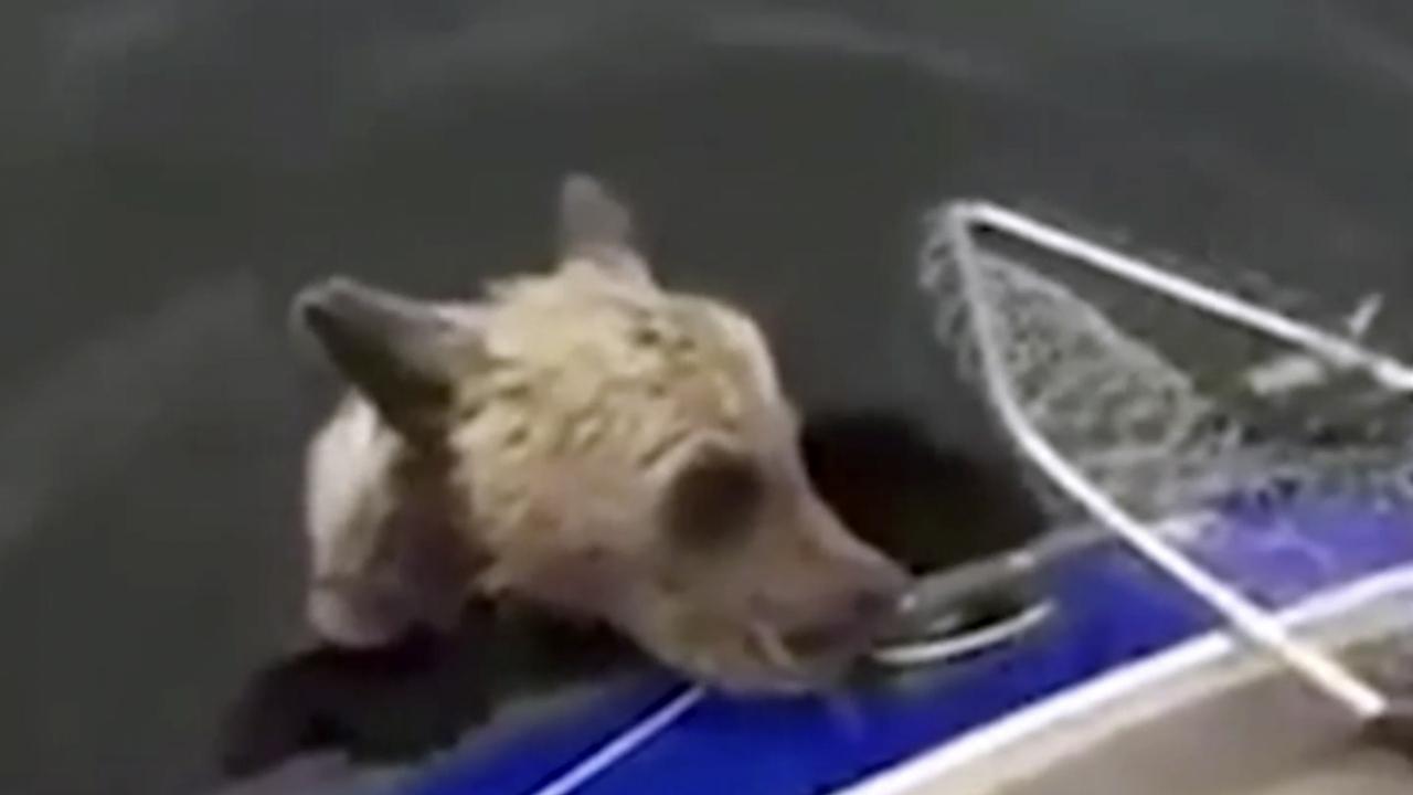 В России рыбаки сачком выловили медвежонка