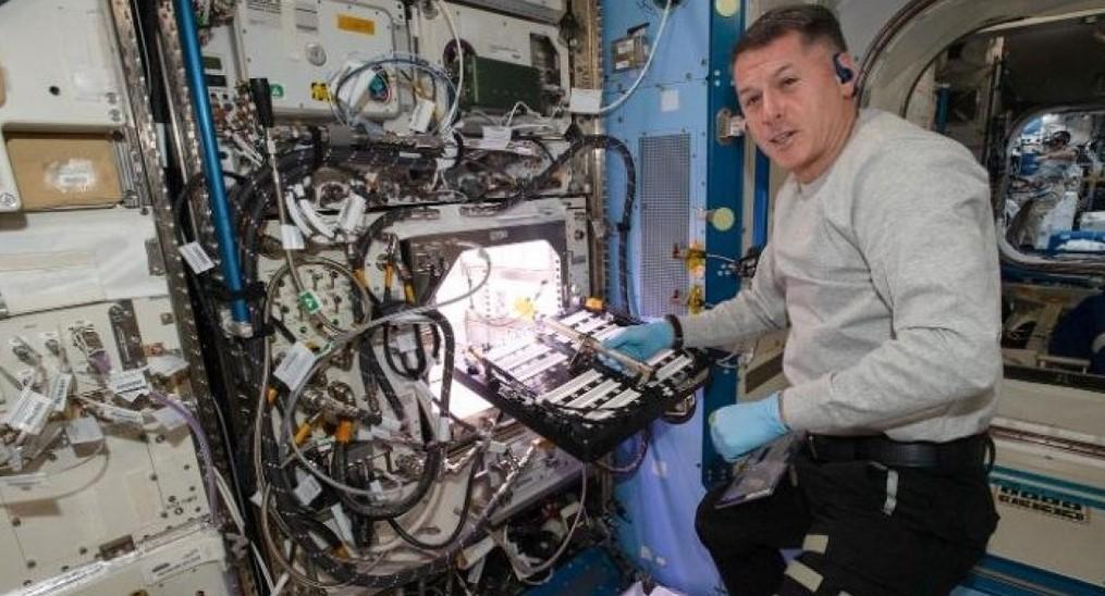 На МКС удалось вырастить первый космический перец чили